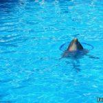 Дельфин с кругом