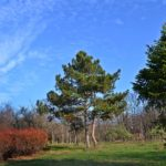 Ель,две сосны, краснеющий кустарник и всё ещё зеленая трава поздней осенью в парке
