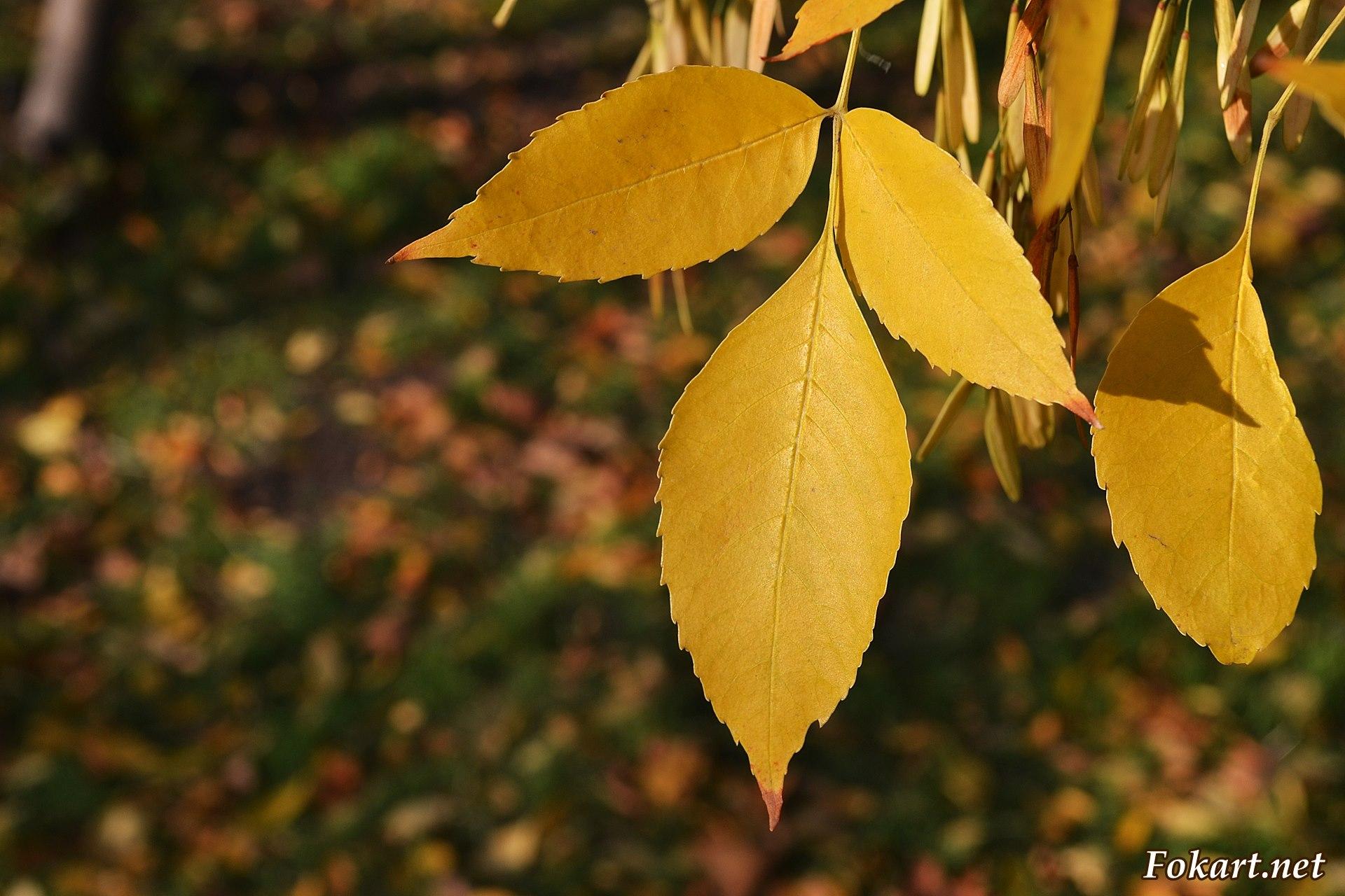 Склонившиеся жёлтые листочки
