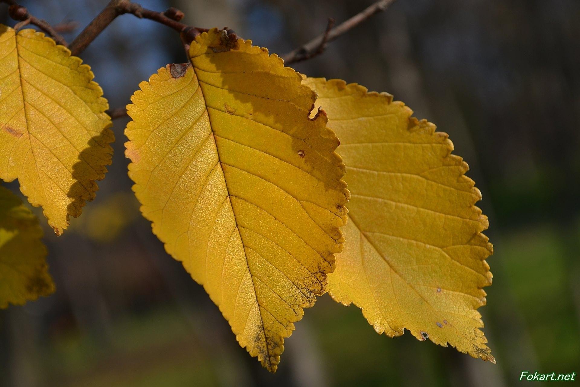 Осенние жёлтые листья на весь экран