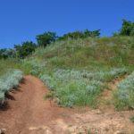 Июньские травы на горке из красной глины