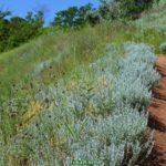 Начало июня. Горка из красной глины и дорожка среди густых летних трав, растущих на склонах.
