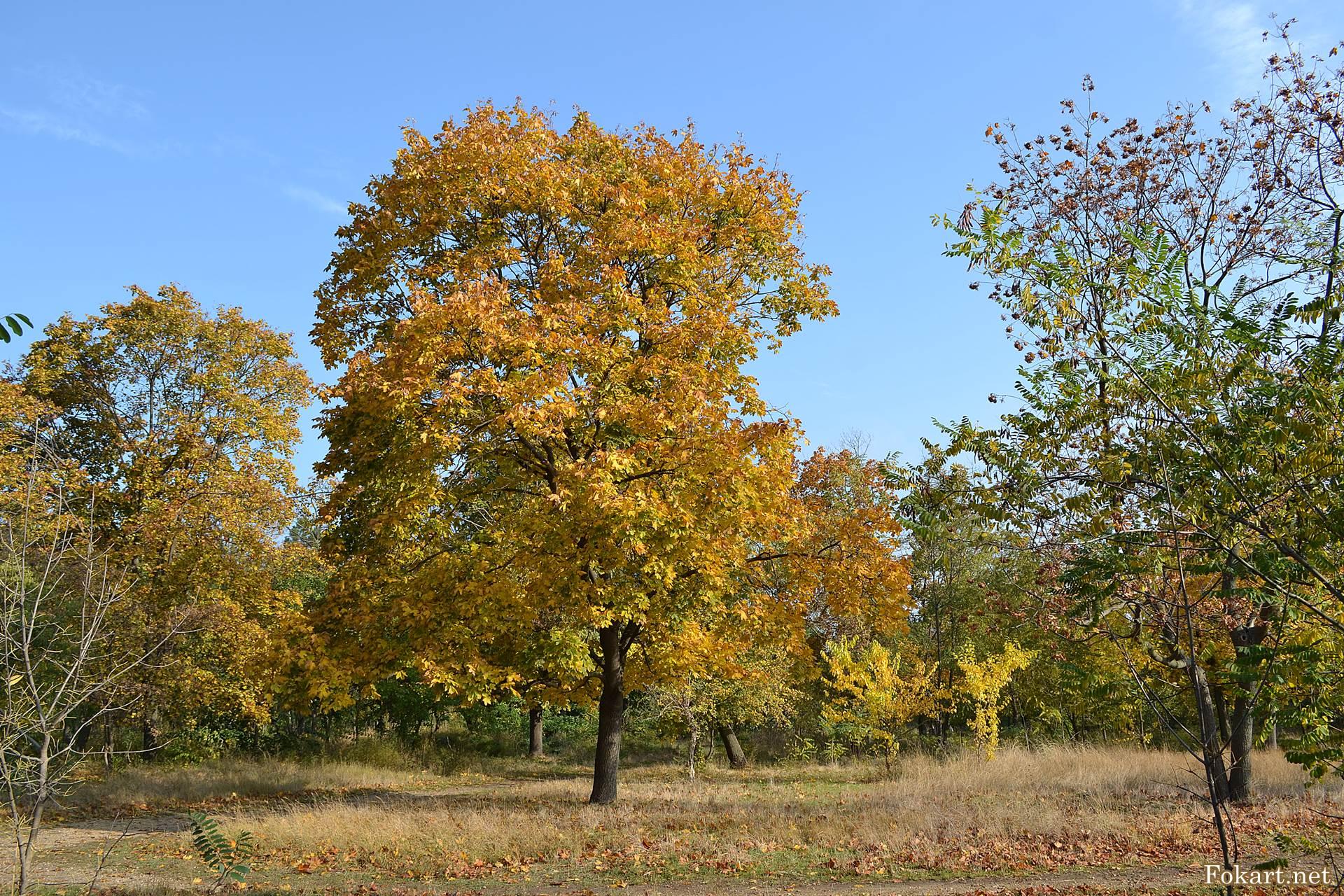 Осенний пейзаж с порыжевшим клёном