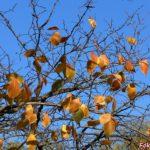 Осенняя ветка с рыжими листьями на фоне неба.