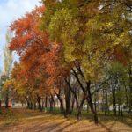 Деревья вдоль осенней дорожки, усыпанной рыжими листьями.