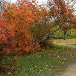Осенняя дорожка среди ярких деревьев.