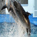 Прыжок дельфинов из воды