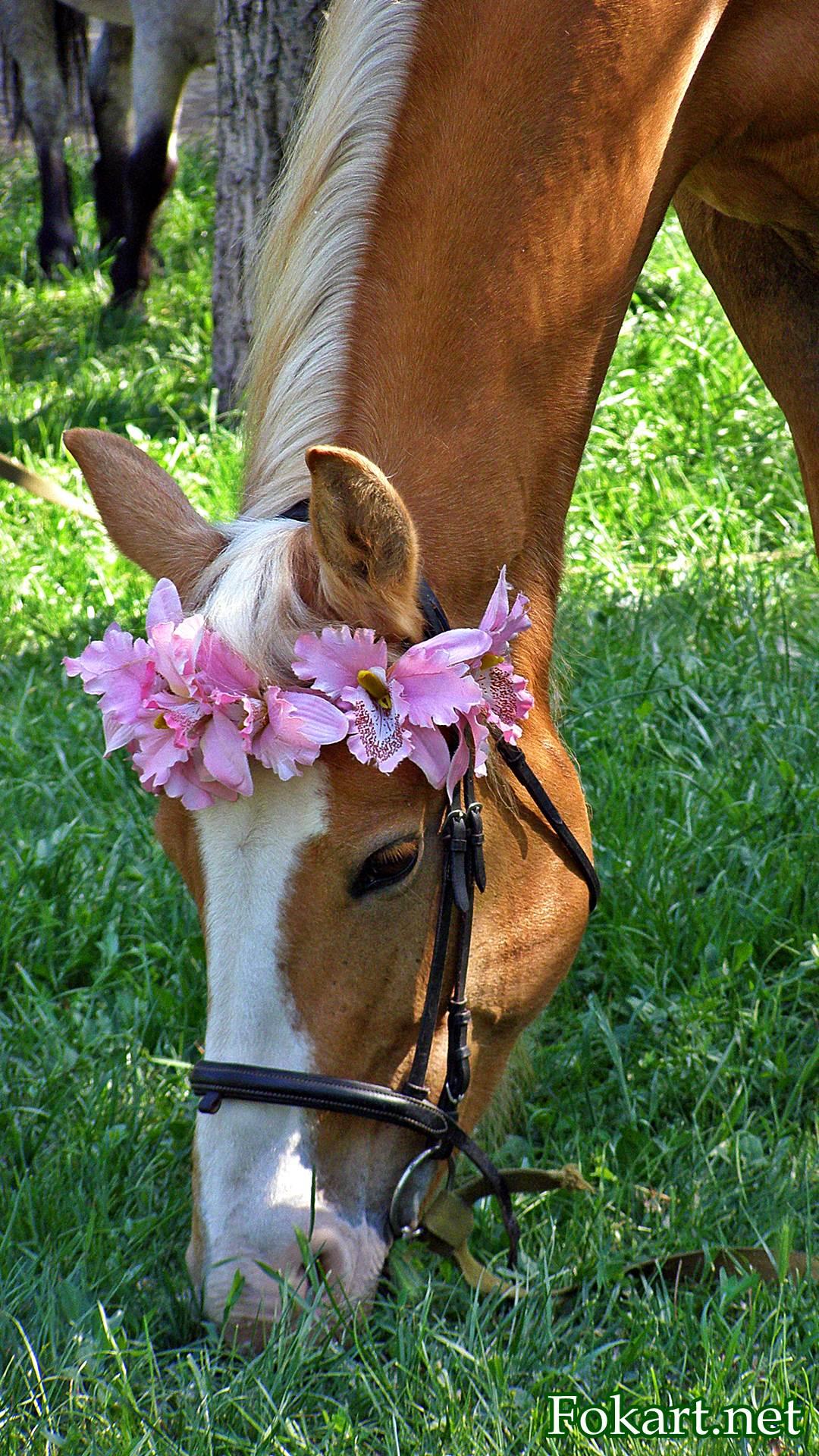 Рыжая лошадь в розовом веночке ест траву