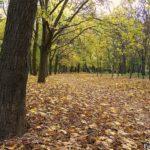 Рыжий ковёр из осенних листьев в парке.