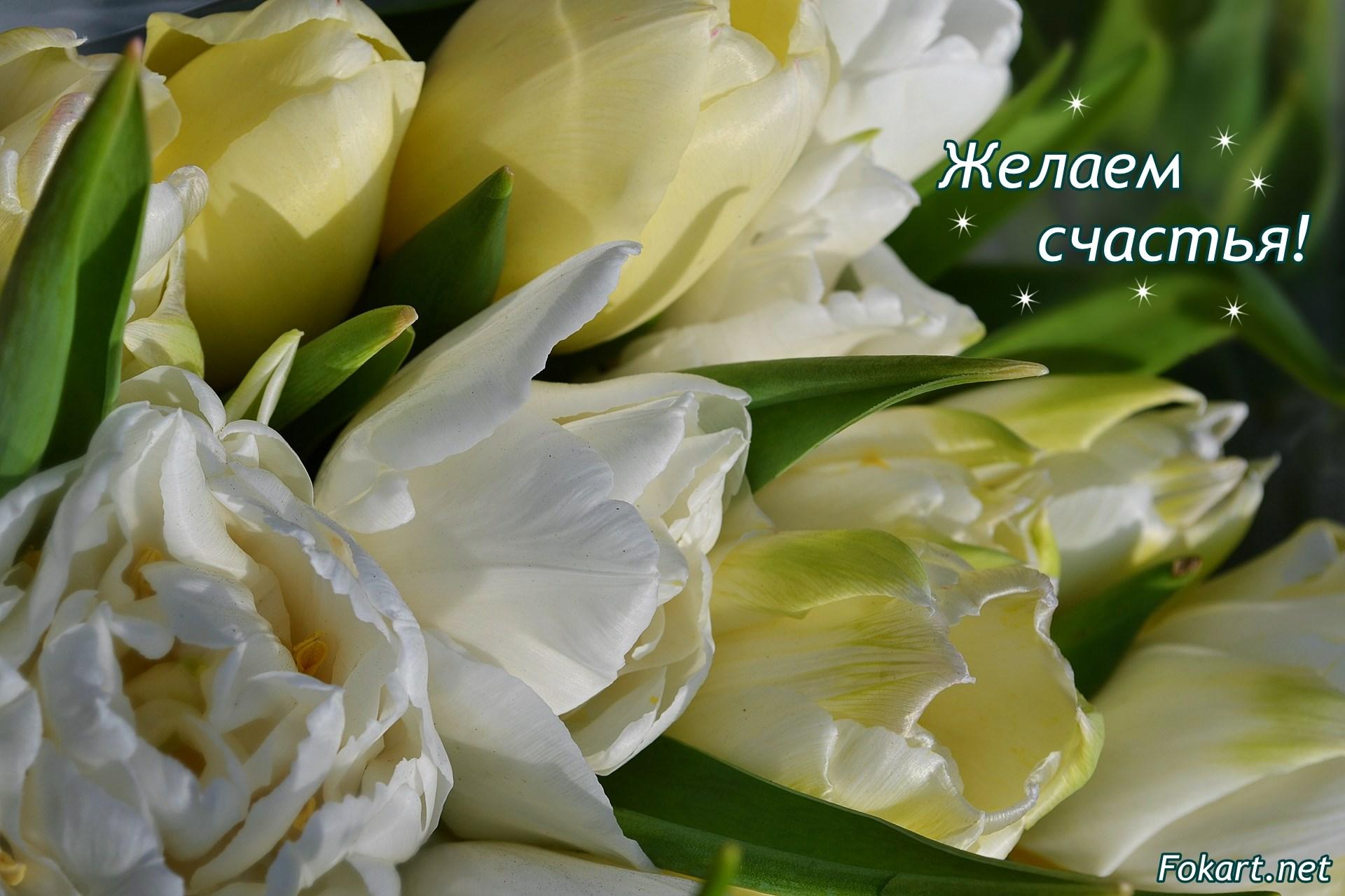 Светлые, белые и желтовато-салатовые тюльпаны. Праздничные обои