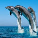 Три дельфина в прыжке над водой почти вертикально