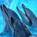 Дельфины в ожидании кормления