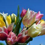 Букет разноцветных тюльпанов на фоне синего неба
