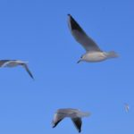 Чайки в ярком небе в зимний морозный день