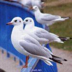 Чайки, присевшие отдохнуть на перила. Фото-картинка