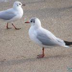 Чайки на мокром песке у самого моря. Крупный план