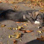 Собака отдыхает среди осенних листьев в начале ноября.