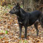 Дворовой пёс, охранник парка, немного похожий на волка.