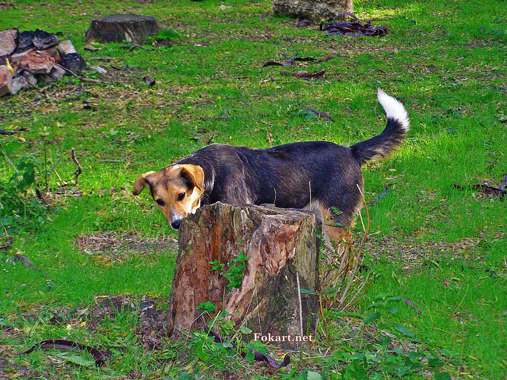 Собака обнюхивает пень, фото-картинка