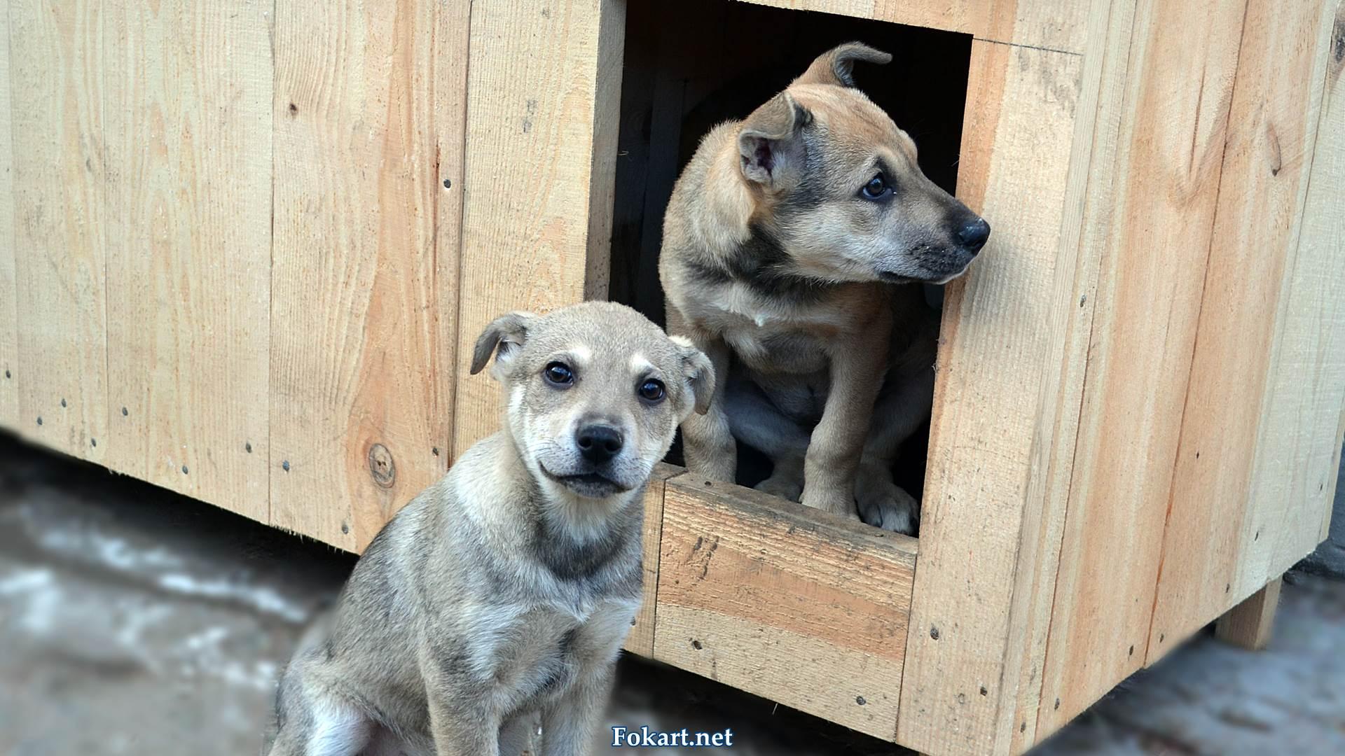 Симпатичные 4-месячные щенки-дворняжки