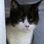 Чёрно-белый кот с зелёными глазками и пятнышками на розовом носике