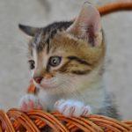 Котёнок в корзинке вблизи