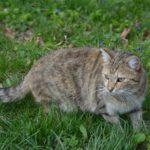 Кошка в весенней траве