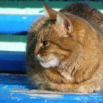 Кошка отдыхает на скамейке. Крупный план. Мордочка кошки сбоку.
