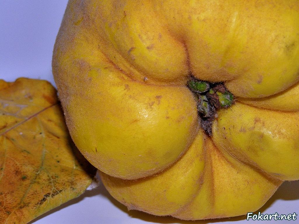 Тёмно-жёлтый плод айвы с листиком крупным планом