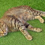 Полосатый кот сладко спит на зелёном покрытии