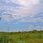 Необыкновенно красивое небо, облака и цветущие травы в середине мая.