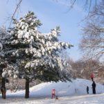 Снежная горка для детских забав в зимнем парке и роскошная сосна, растущая рядом