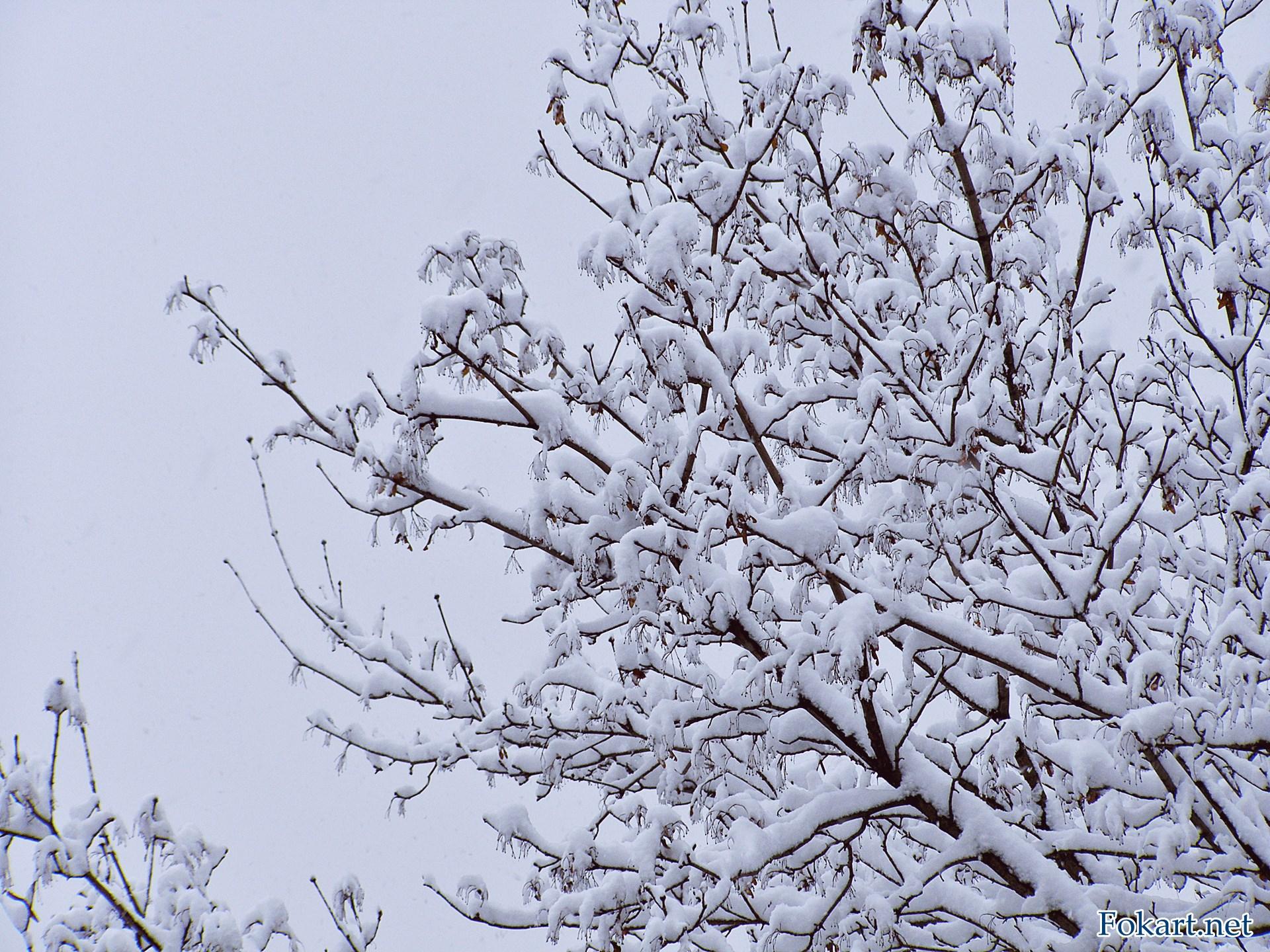 Ветки дерева в пушистом покрывале зимы. Снегопад