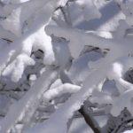 Зимние веточки, покрытые снегом. Крупный план.