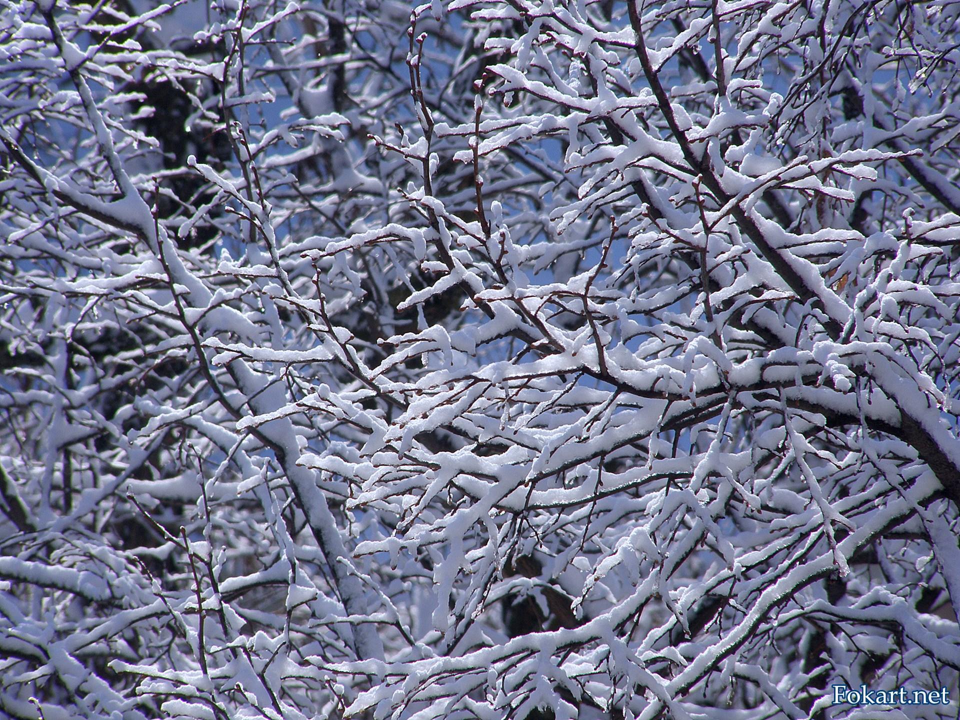 Заснеженные ветки липы в мягких лучах зимнего утреннего солнца