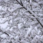 Ветки дерева, укрытые белым покрывалом, под снова идущим снегом