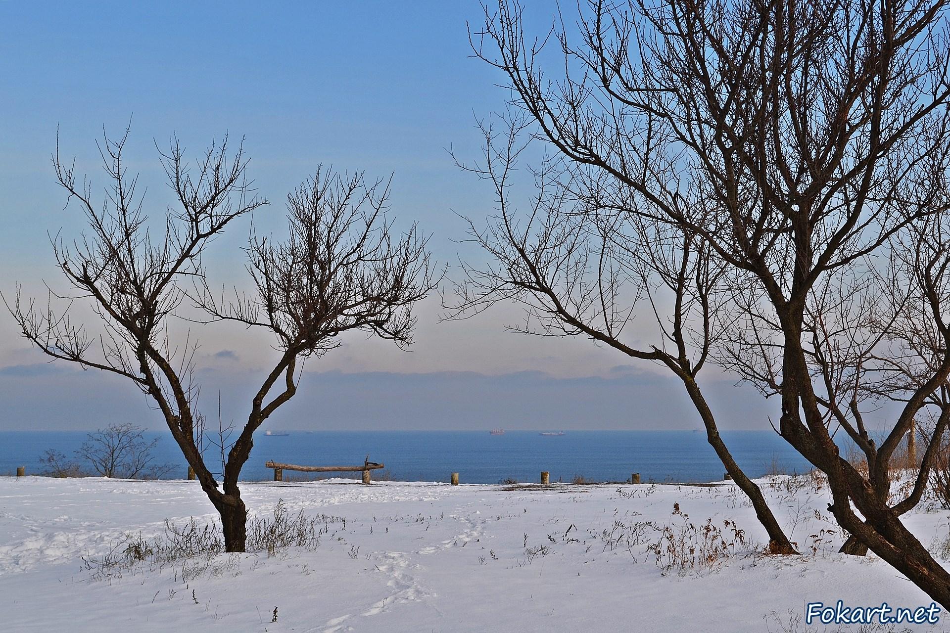 Сухие травы в снегу, голые деревья и вид на море