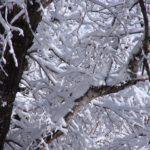 Ствол и заснеженные ветки дерева зимой