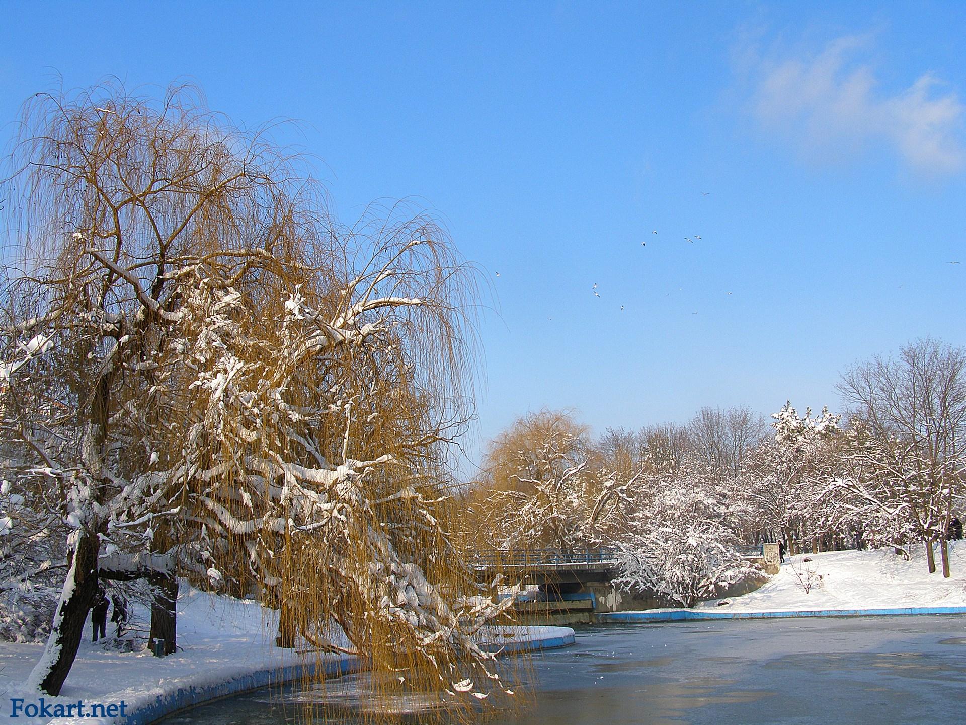 Заснеженные ивы над замерзающим прудом в парке