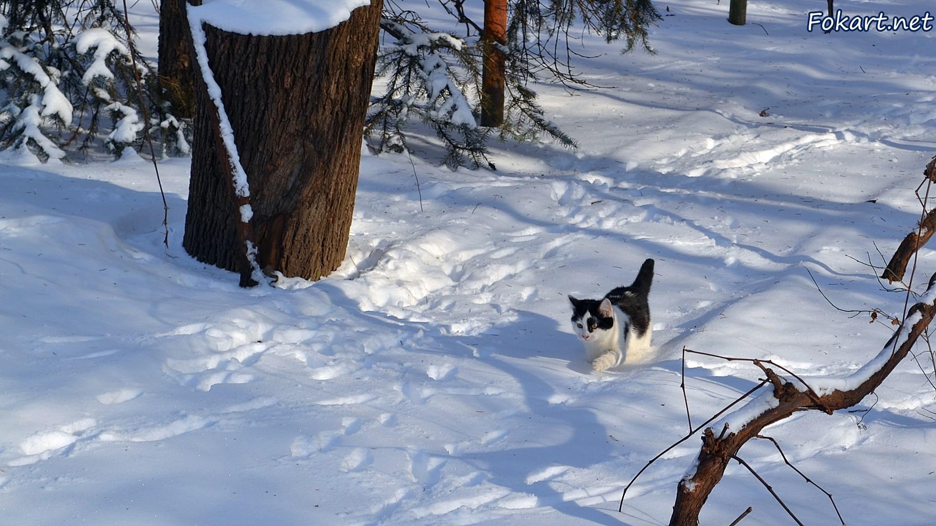 Кот, идущий по снегу