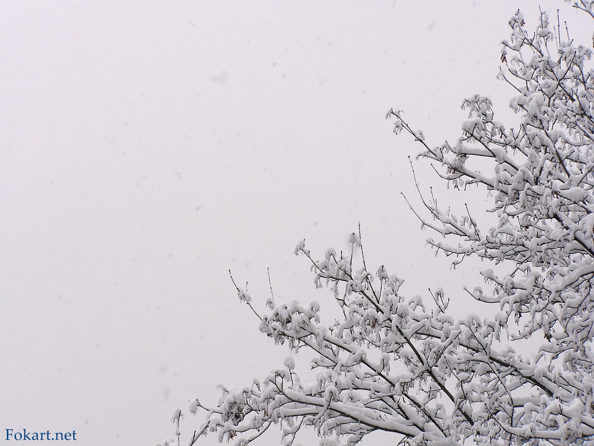 Сильный снегопад, плохая видимость. Заснеженные ветки на фоне сероватого неба