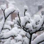 Летящие крупные снежинки и заснеженная веточка