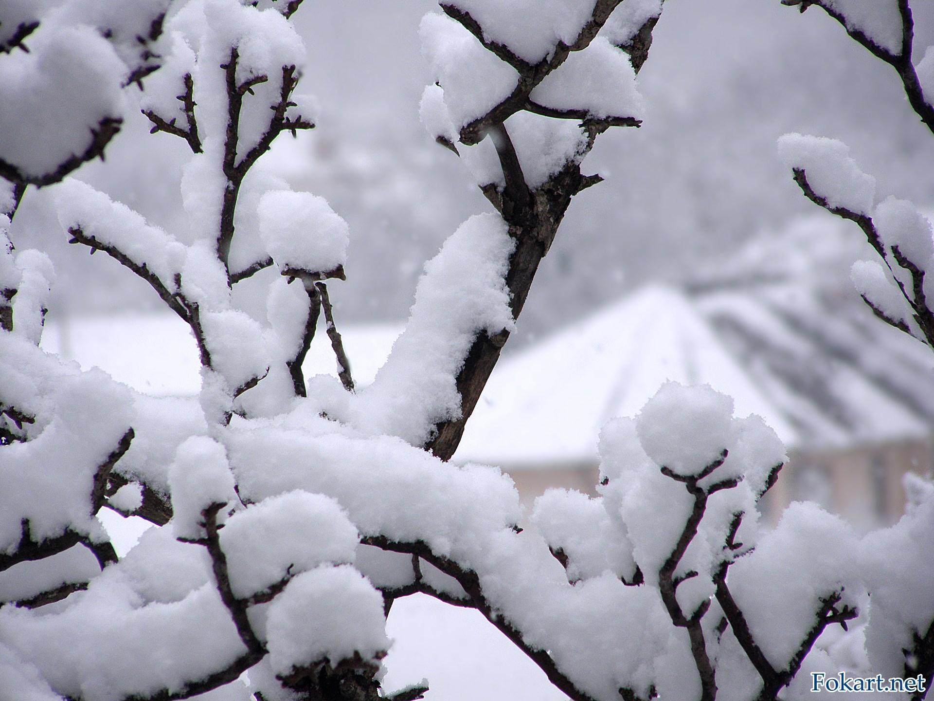 Пушистый снег на веточках и снегопад
