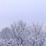 Заснеженные деревья и снегопад зимним утром