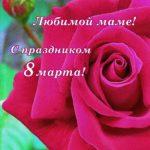 Красивая роза. Открытка маме с 8 марта