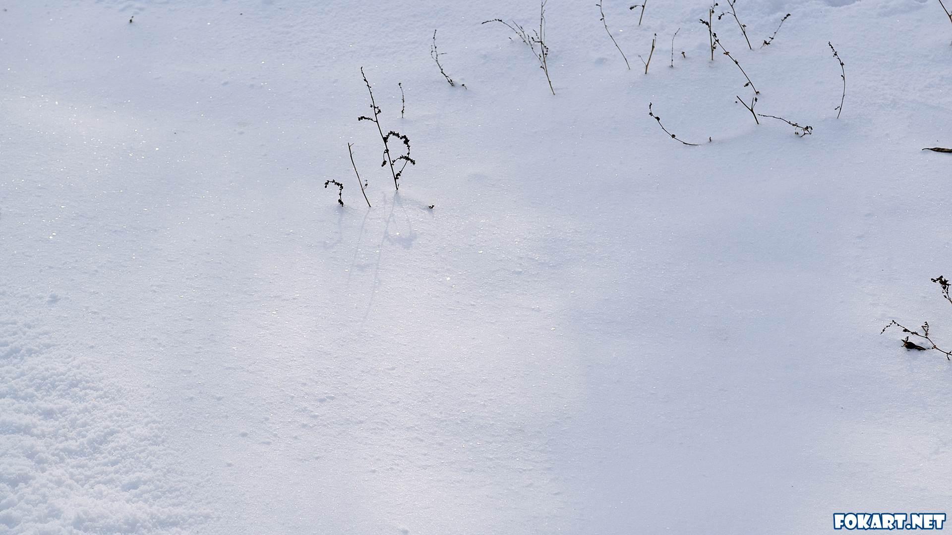 Свежевыпавший глубокий снег блестит в мягком свете лучей послеобеденного солнца