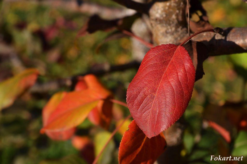 Красный листок