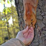 Белка берёт орех, фото 2