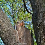 Белочка с орешком на срубе дерева