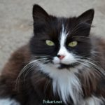 Кисинька, милая кошка